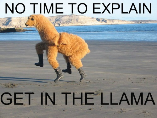 No Time To Explain - Get In The Llama