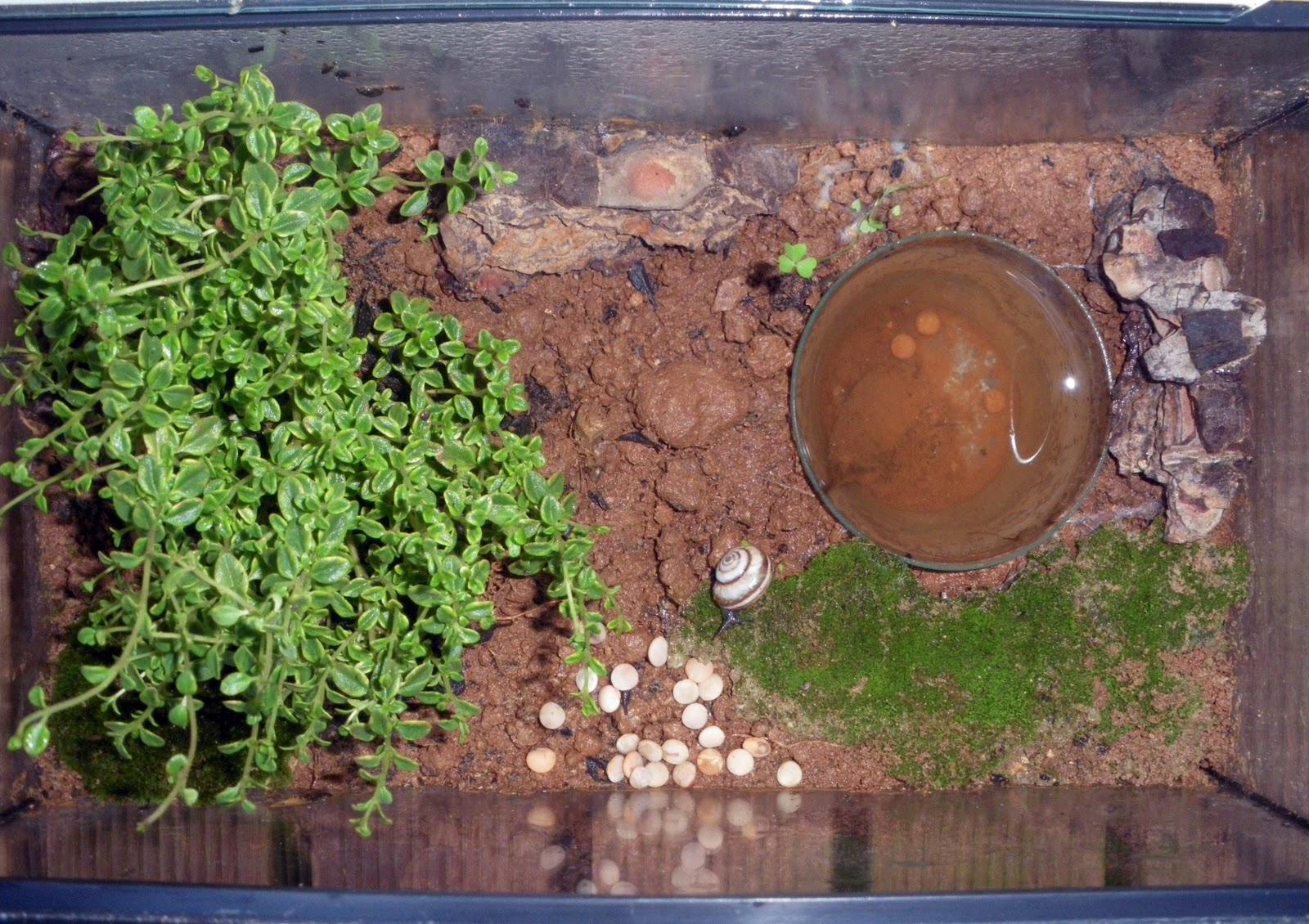 El rinc n del armadillo blog de actividades infantiles - Plantas para ahuyentar insectos ...