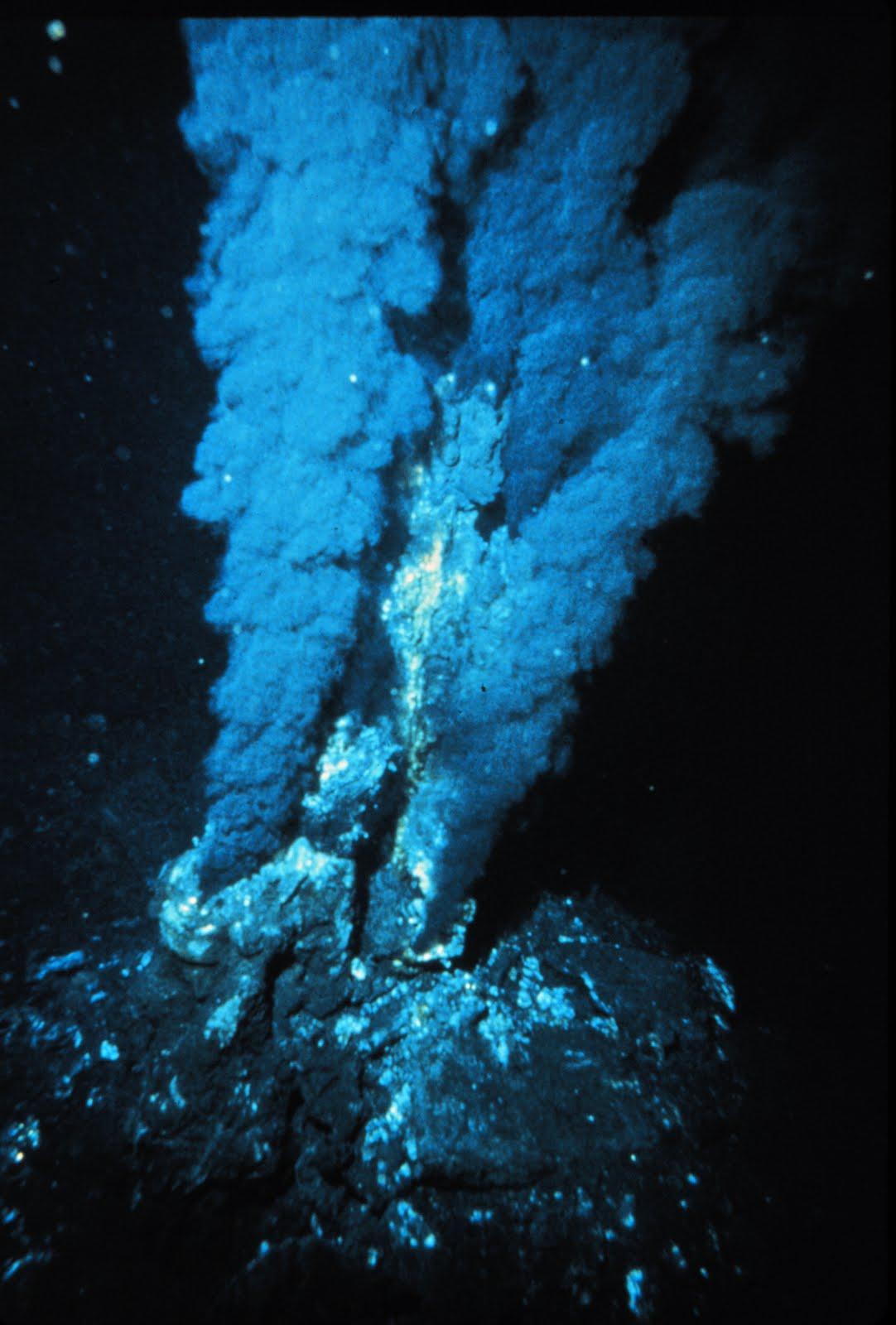 chemosynthesis organisms found