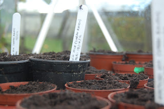 Seed trays, labelled