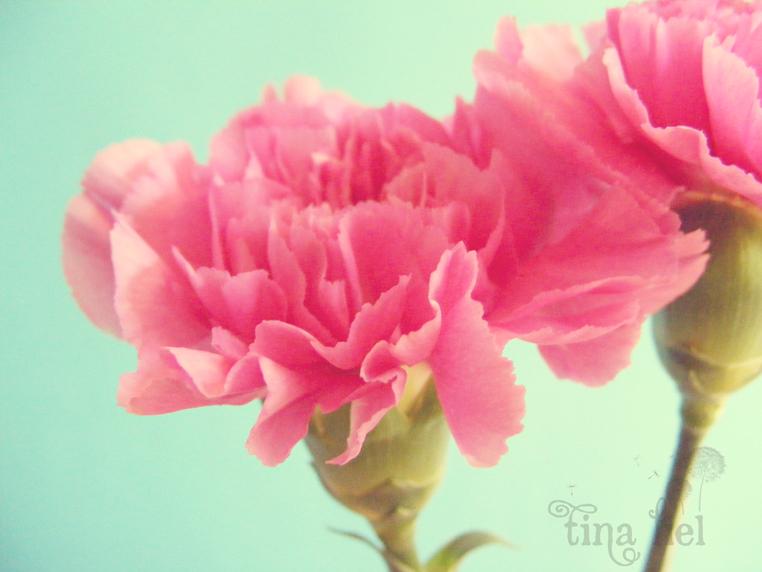 nelliker stor blomst