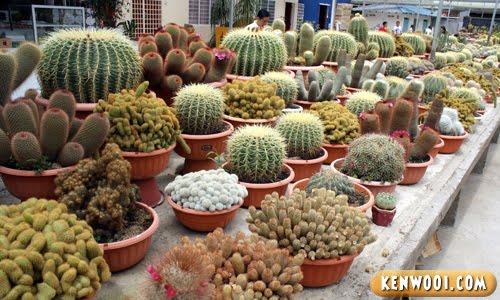 cameron cactus