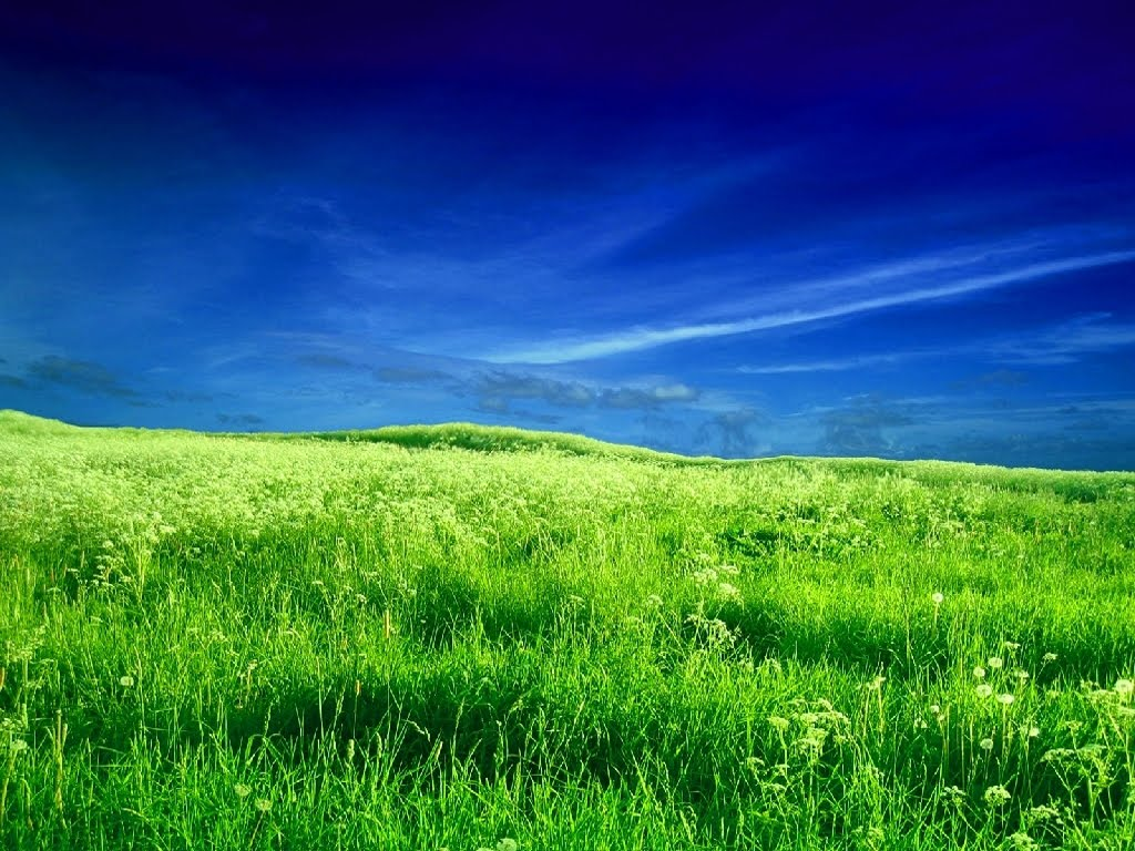 hd field wallpaper - photo #5