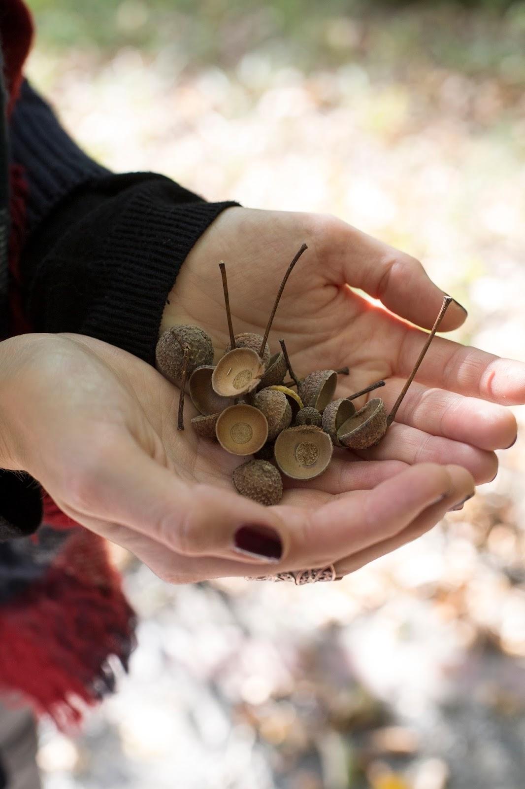 Waldspaziergang im Herbst - Eicherlhütchen