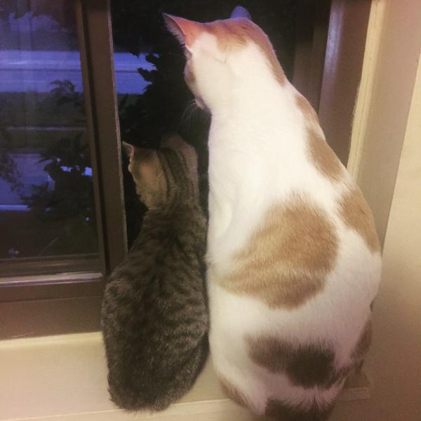 Кот и кошка смотрят вместе на светлячков