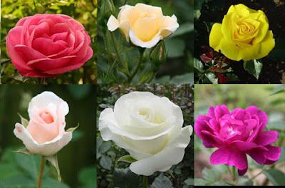 Các loài hoa đẹp 08