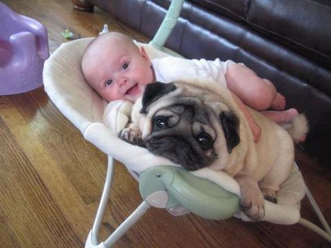 comic, joke, cute dog with cute baby