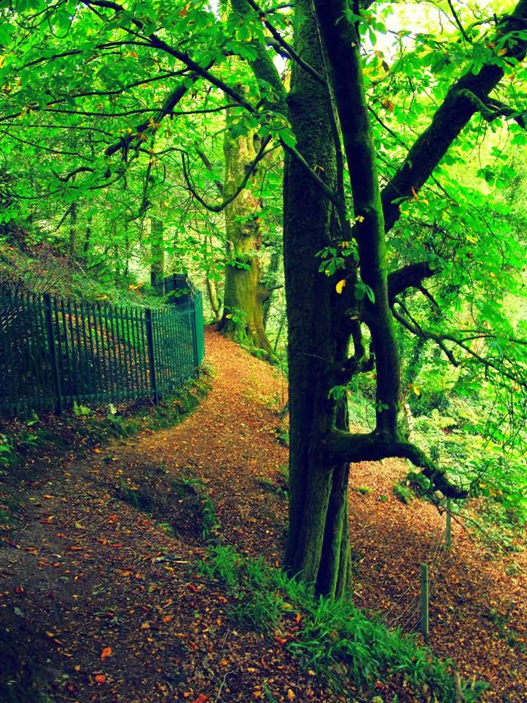 green forest, iron fence