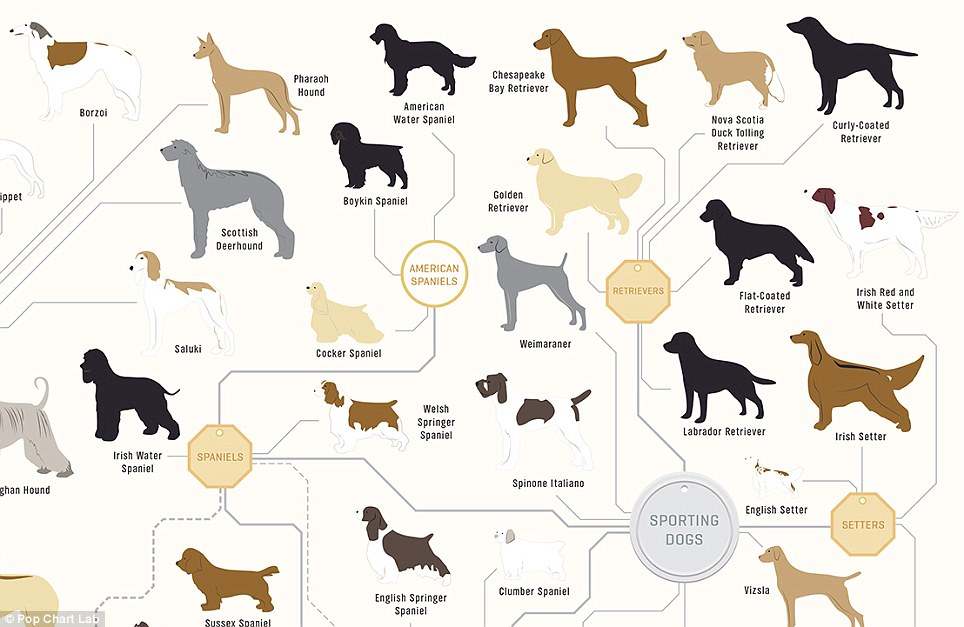 Original Dog Breed To Be Domesticated