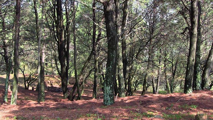 pinos de iramuco