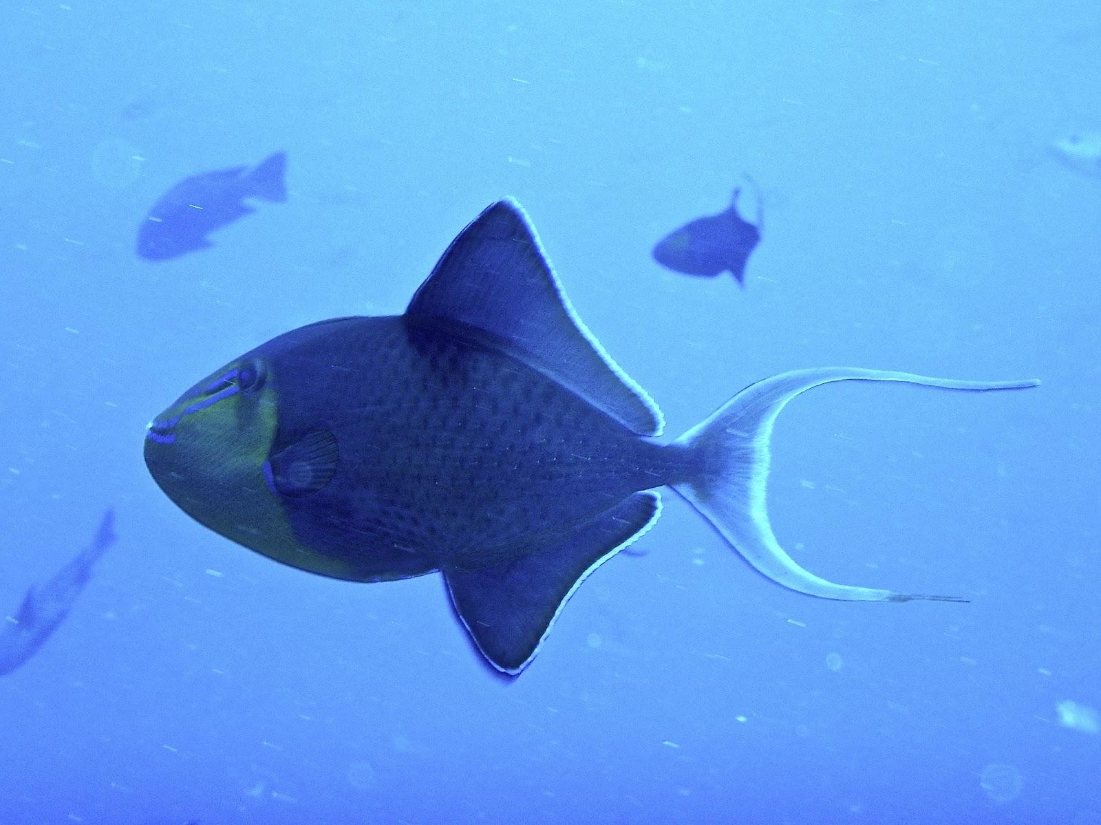 23 fish you u0027ll meet in palau adventures of an aquaholic