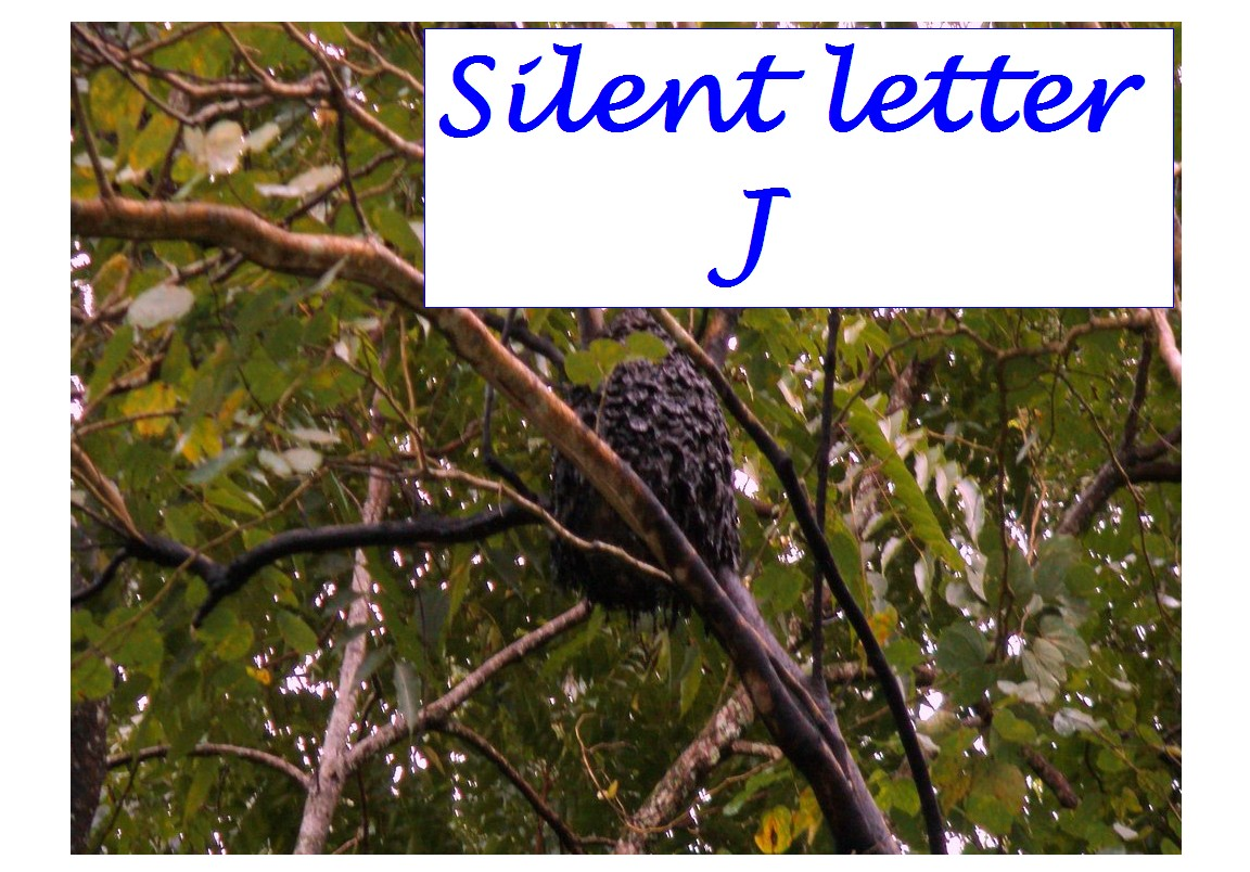 Silent Letter J Silent Letters In English Words