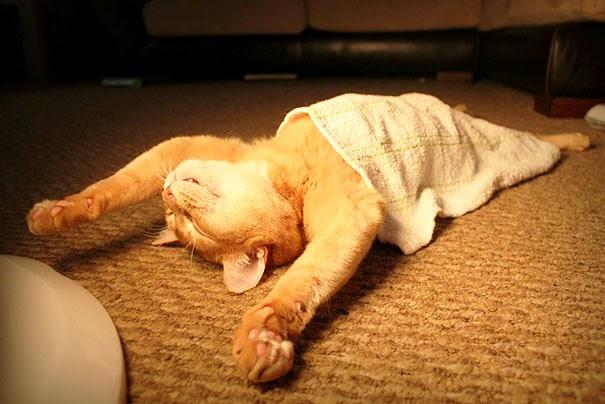 коты спят как хотят
