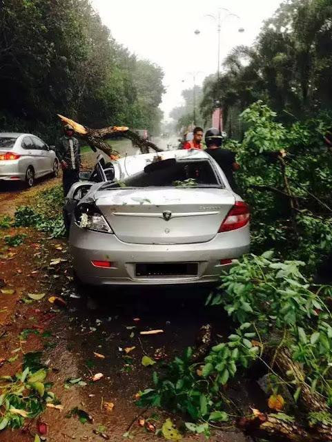 kereta persona dihempap pokok
