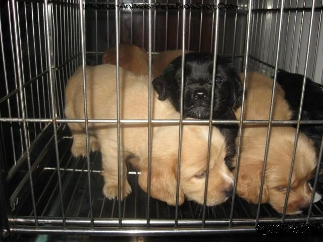 http://2.bp.blogspot.com/-44pM2YCeBFI/TbA34cPm0wI/AAAAAAAAAtg/5ZBogTRk9WE/s1600/These%2Bcute%2Bpuppies_0002.jpg
