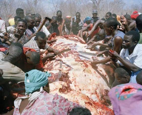 http://www.opoae.com/2013/03/warga-zimbabwe-berebut-bangkai-gajah.html