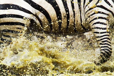2011 National Geographic Photo Contest Winners Seen On www.coolpicturegallery.us