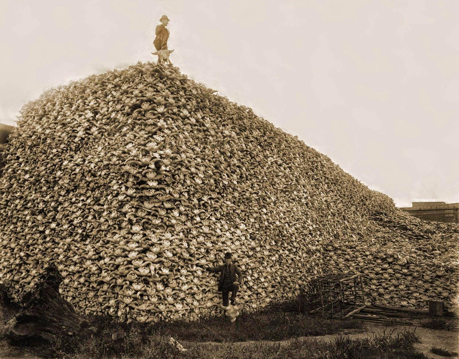 Pila de cráneos de bisontes 1870