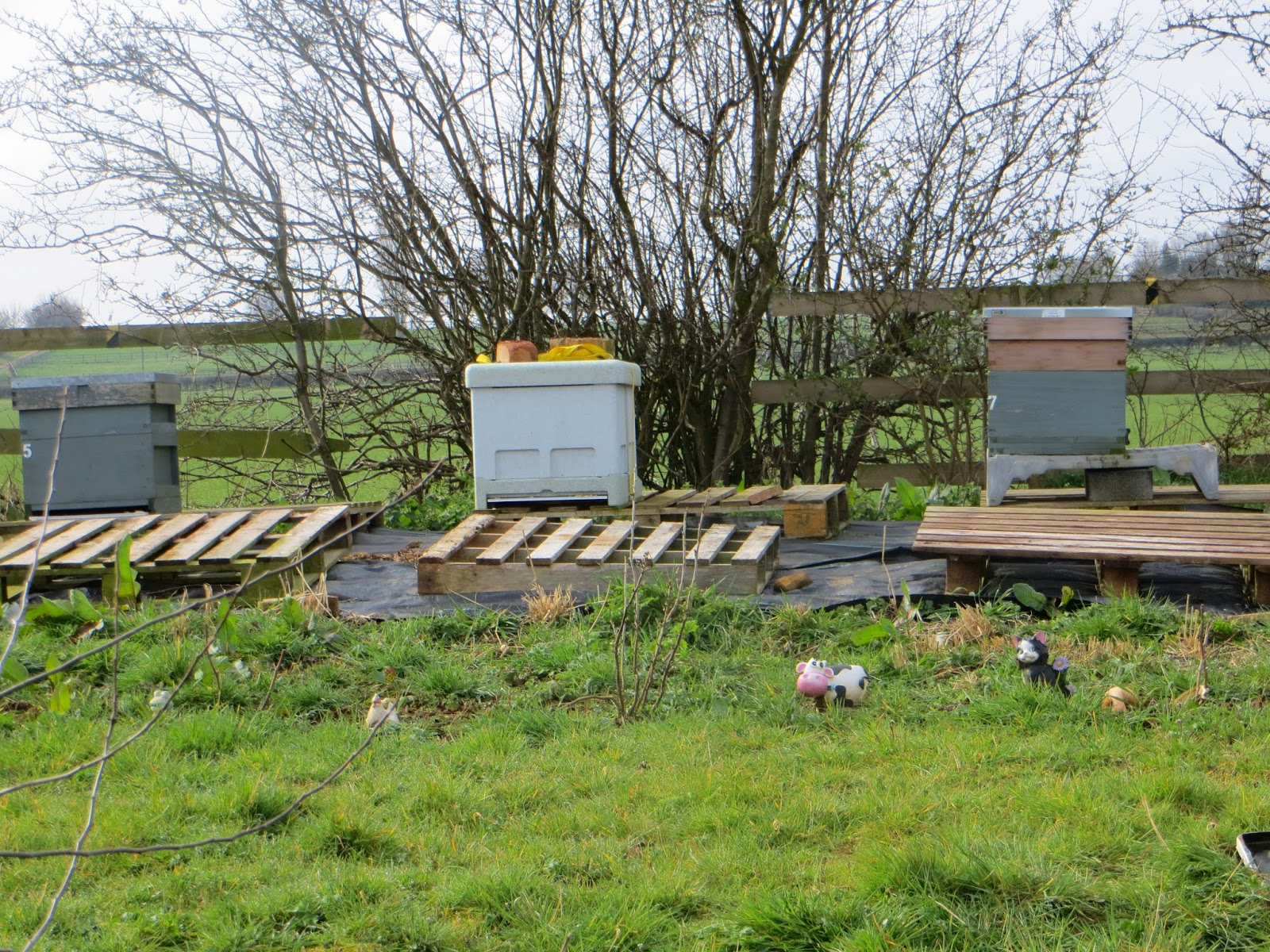 Excellent view point of the hives.