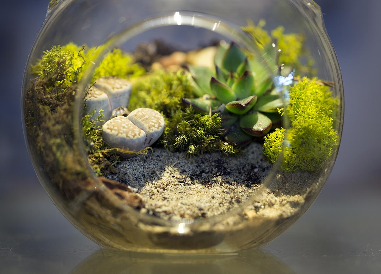 The Fern And Mossery March 2013 # Terrarium Dangle