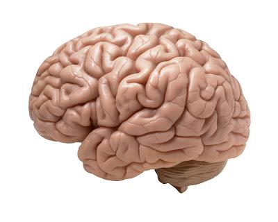 Los límites del cerebro