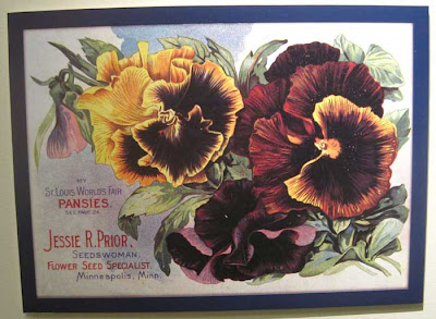 Litho of dark and yellow pansies