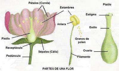 Funciones de los macronutrientes en las plantas