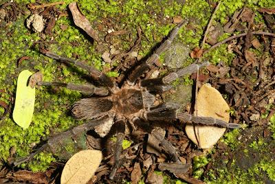 biodiversity Nicaragua