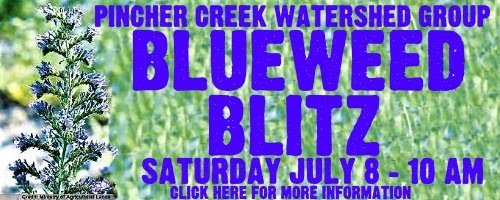 Blueweed Blitz