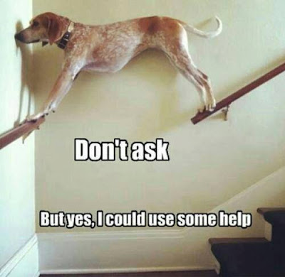 "Dog stuck on stair railing says ""don't ask, but yes, I could use some help."