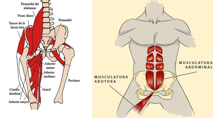 Lesiones de la cadera: Osteopatía de Pubis | Salud con Medicina ...