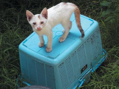 Foto-Foto Anak Kucing Lucu di Luar Jendela Kamar Kost Gue 12