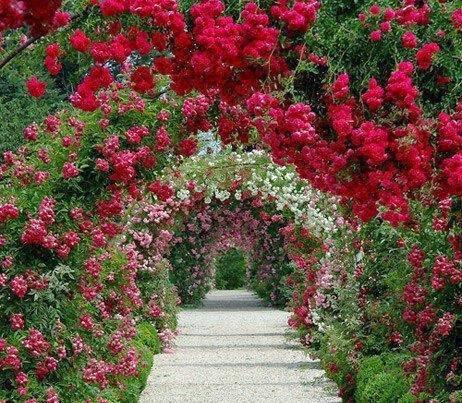 O Túnel em Flores!...