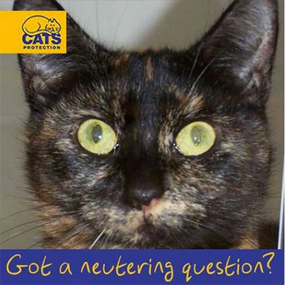 Do you have a question about cat neutering?