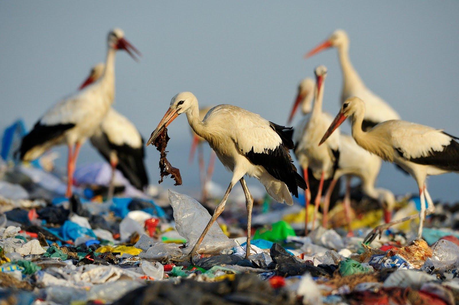 Planeta o Plastico