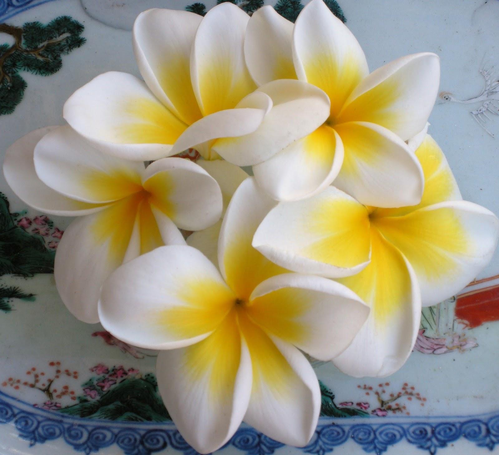Plumerie di sicilia for Nomi fiori bianchi e gialli