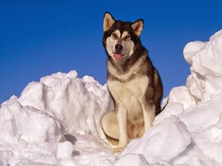 Pas na snijegu, zima slike besplatne pozadine za desktop download