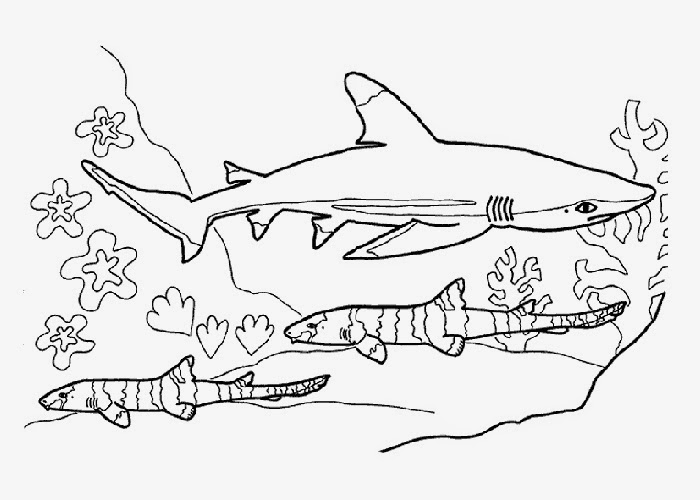 sharks coloring pages free coloring pages and coloring