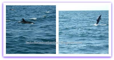 Passeio para avistar golfinhos em alto mar, Lagos, Algarve. Portugal.