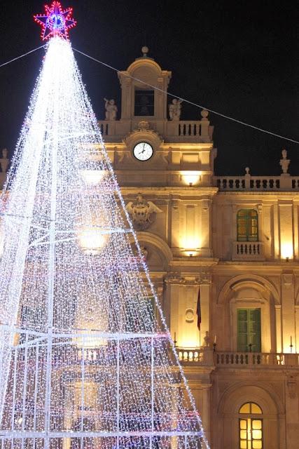 L' albero di Piazza Università