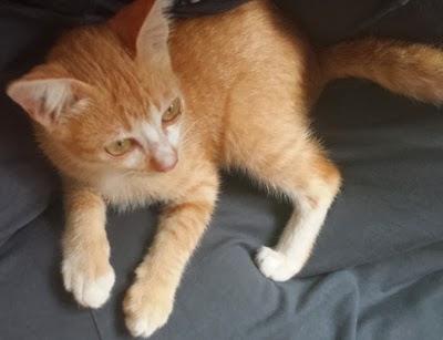 kucing comel, custom