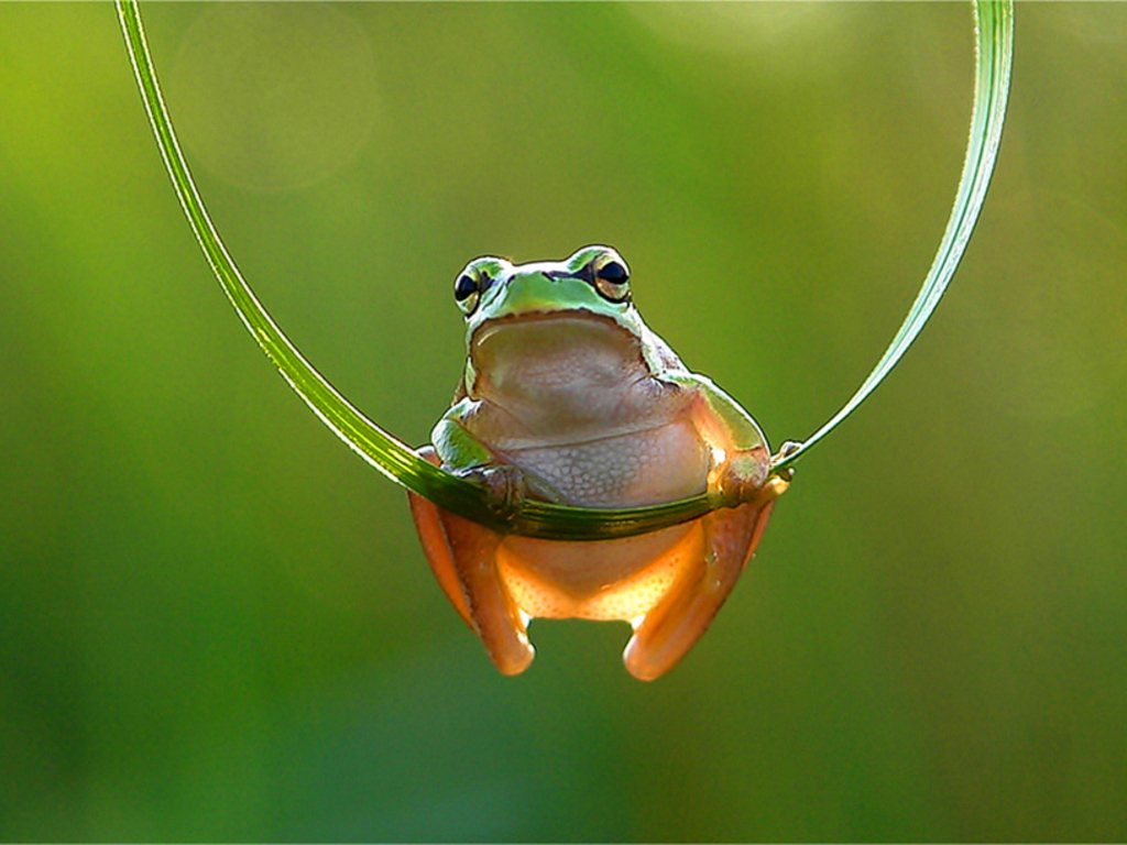 free high definition wallpapers colorful frog wallpapers