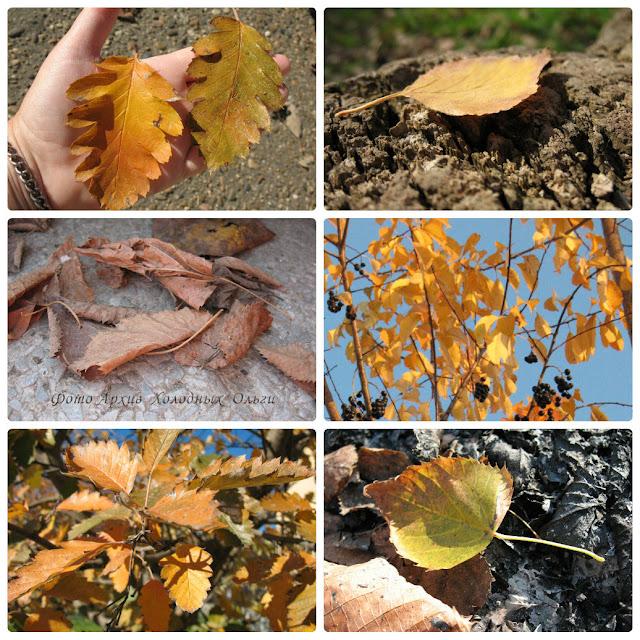 Листья, как судьбы, у всех разные...