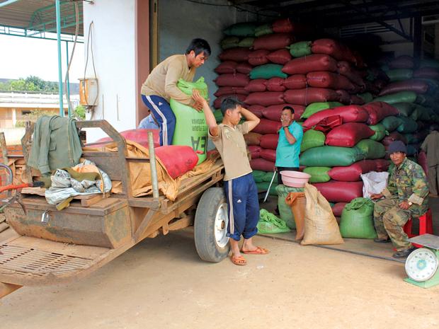 """Gia Lai: Thị trường cà phê """"chao đảo"""" - Kim ngạch xuất khẩu giảm mạnh"""