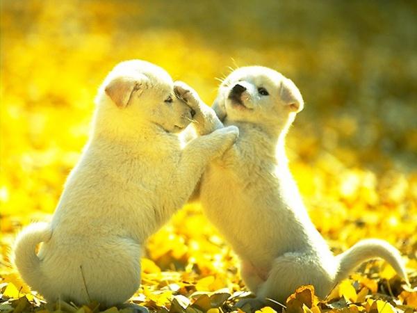 ดูแลสุนัข(2)
