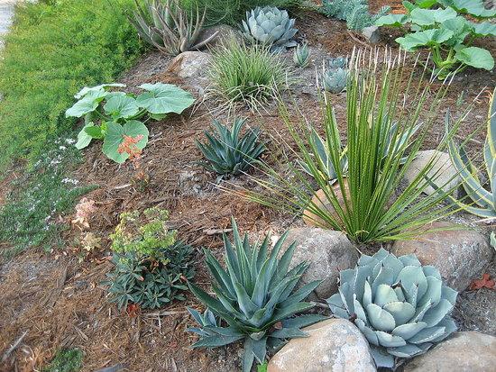 Easy Landscaping Ideas Photograph Drought Resistant Landsc