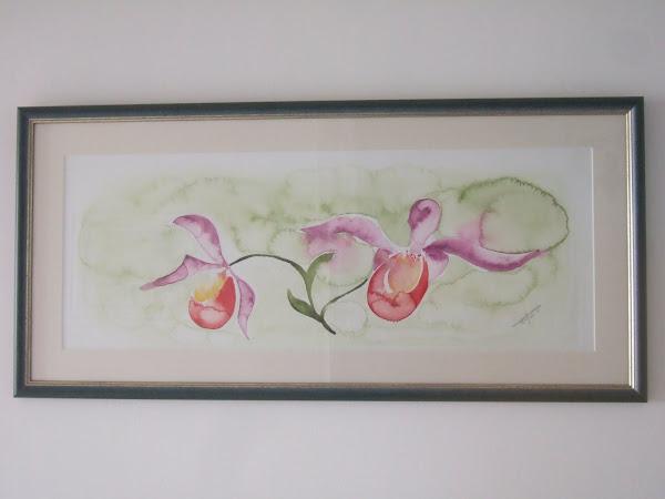 Fleur : Orchidée