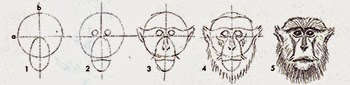 http://tips-trick-idea-forbeginnerspainters.blogspot.com/2014/12/drawing-lion-primate-heads-in-easy.html