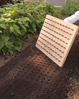 DIY Planting Board