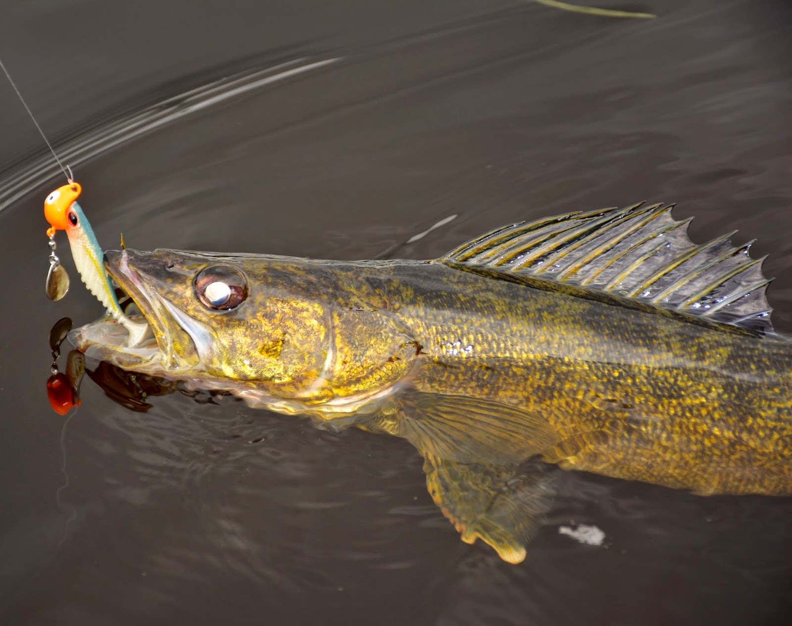 Specialty jigs for pike and walleye for Jig fishing tips